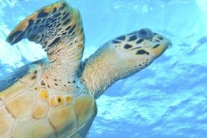 Sea Turtle Season South Florida