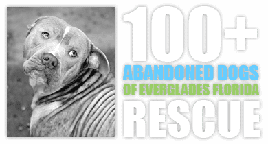 100+ Abandoned Dogs of Everglades