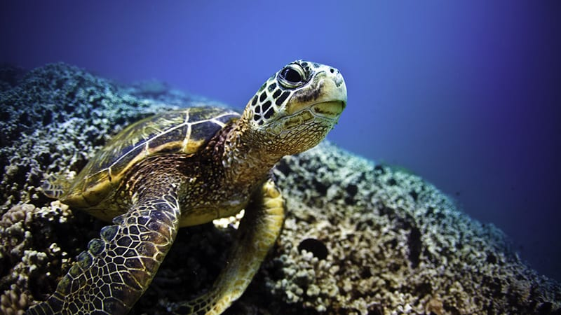 Your Sea Turtle